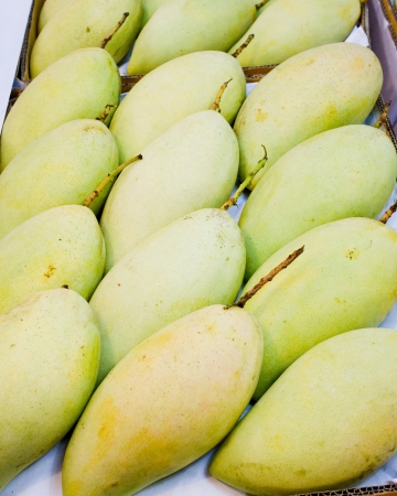 Sweet mangoes with green creamy texture when ripe and sweet flavored flesh  Stock Photo - 21305065