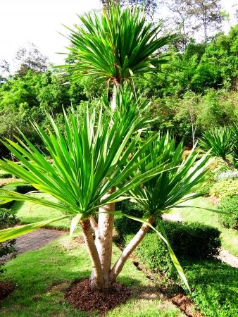 chan: Chan pha in a botanical garden , Chiangmai , Thailand                                              Stock Photo