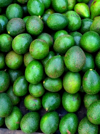 nutrients:   Avogado or Schiavo Delgado is a fruit cultivated in tropical climates and rich in nutrients and minerals