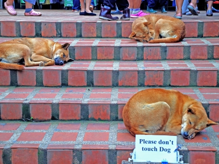 Three stray dogs sleep on concrete  steps