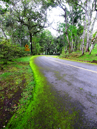 The road with moss on its curbs  goes downhill through the forest
