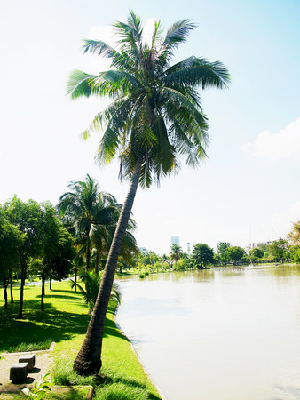 A city park with a coconut tree on a lake bank