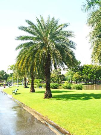 lifespan:   A row of palm trees along a lake bank