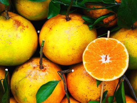 rutaceae:  Oranges with sweet and sour flavors