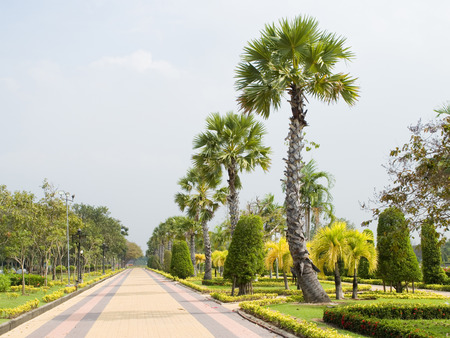 lineage: A row of palms and gardening plants along a walking path in a garden