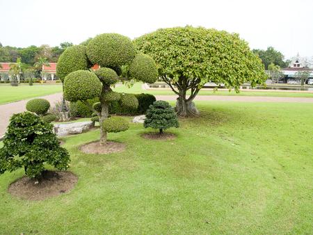 ebony tree: A decorative garden of small shrubs ,ebony and bo tree  Stock Photo