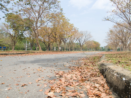 Landscape of deciduous of trees to lose theirs leaves yearly