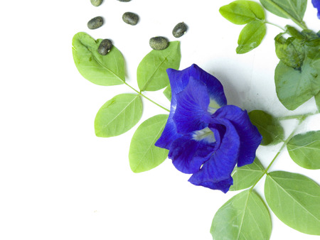 Flower petals have blue color that can be extracted and can be used in food coloring ,hair color  Seeds can be used as a laxative
