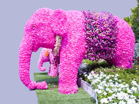 Floral arrangements to be pink elephants ,mother and its kid  Stock Photo