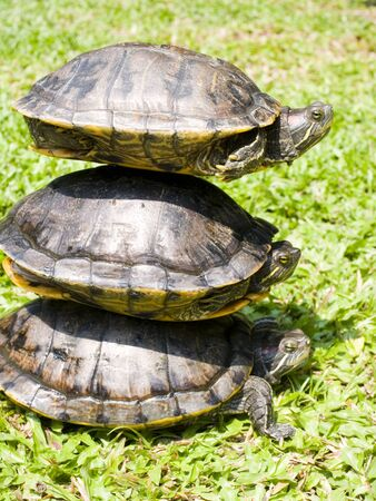 long lived: Turtles is considered one of the most long - lived animals   They are covered by shells and can eat both plants and animals