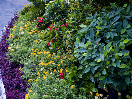 bordered: A small garden with colorful  ornamental plants and is bordered by white  woody fence