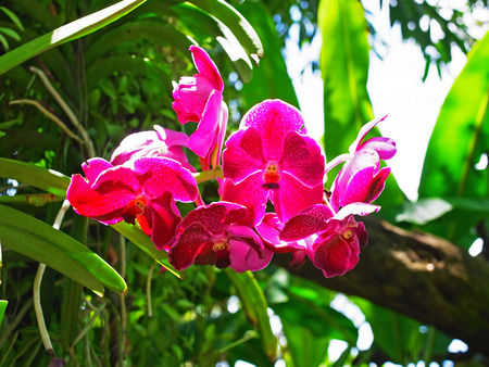 epiphyte: Orchid and glowing orchid flowers grow on a tree branch as an epiphyte.