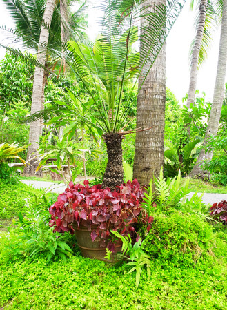 epiphytic: A small garden of epiphytic  and leafy plants decorated in tropical styles.