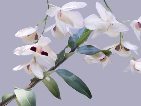 black eyes: Un mazzo di fiori di orchidea giallo pallido con grandi tondi occhi neri.