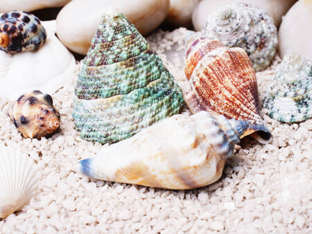 Various types of beautiful sea shells on sand. Stock Photo