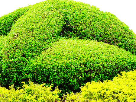 A garden designed to be composed of shrubs and ground cover. Stock Photo