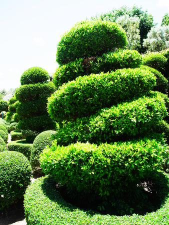 bending: The formal garden of dwarf and bending trees that bend into spiral shaped canopy.