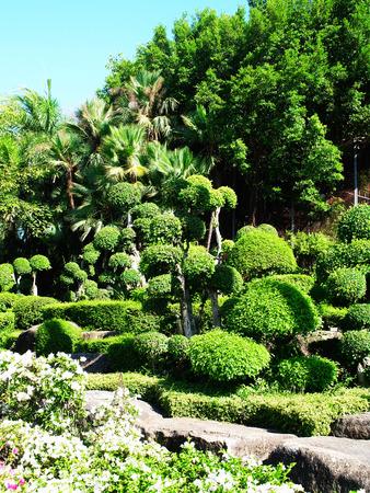 ebony: A formal  garden of ebony and flowers in sunny area .
