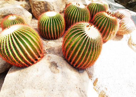 liked: Cacti in a rock garden which is designed to be liked a desert.
