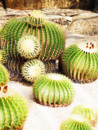 carry out: Cacti of succulent flat shaped and enlarge spiny stems to carry out photosynthesis.