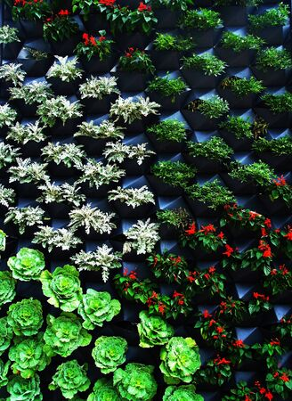 Vertical garden demonstrates various vegetables grown in specific container. Stock Photo