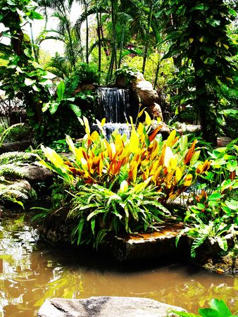 liked: A garden of various species of plants which arranged into forest - liked garden with a waterfall in the background.