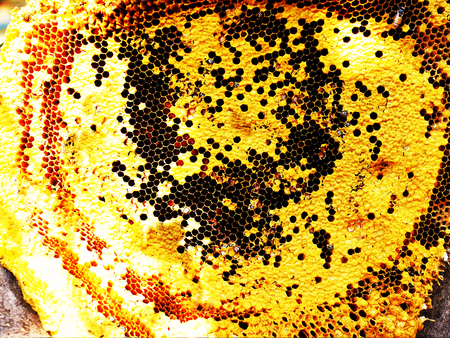 enclosed: An enclosed structure made of beeswax and bees live and raise their young . The hexagonal cells inside the beehive are used to store honey and pollen.