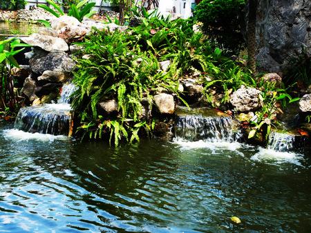plants species: Un giardino di cascate, felci e varie specie di piante.