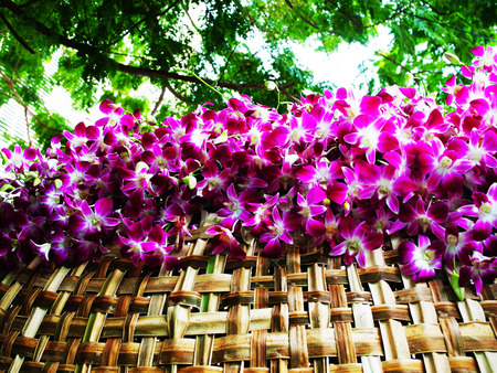 liked: Purple orchids are on show on a thatch - roof  liked structure.