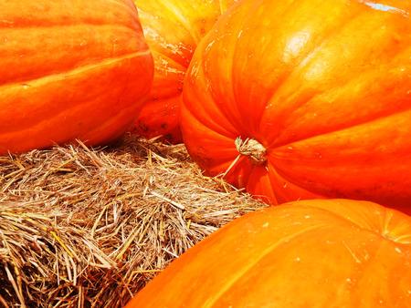 longitudinal: Pumpkins  with yellow skin and shallow  longitudinal sulci on their  surface.
