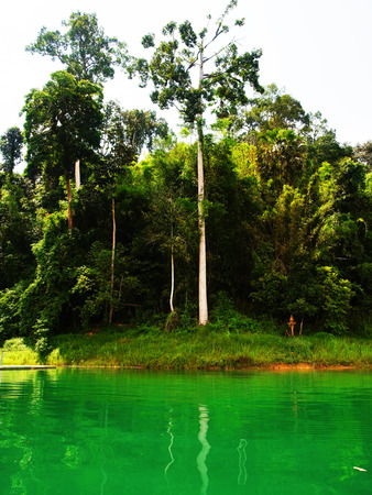 oleoresin: Dipterocarpus alatus is a tropical forest tree and be considered as and endangered species.