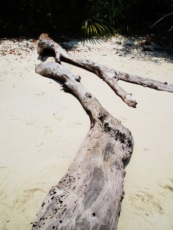 mould: Dead woods become mould on beach.