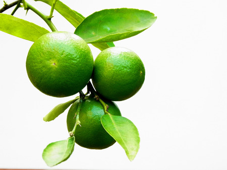 acidic: A bunch of lime fruits on white background. Stock Photo