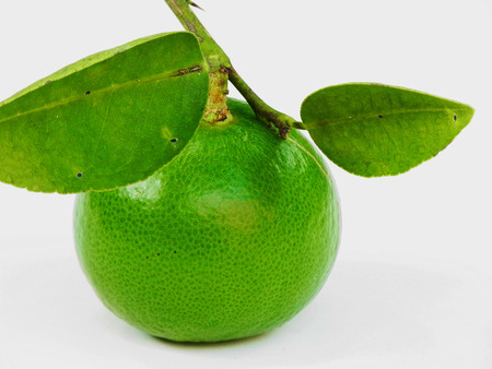 nutriment: Lime