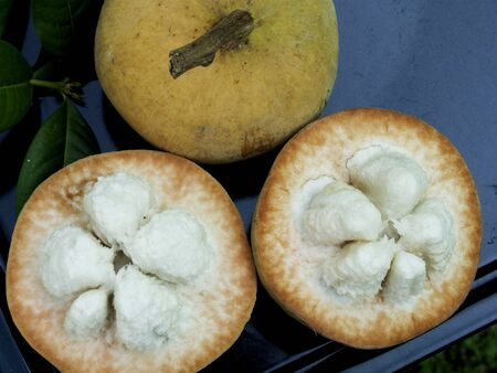 Santol fruits are tropical fruits with yellow skin and whit fluffy flesh.