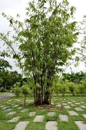 building materials: Bamboos are the fastest - growing plant and can be used for building materials and food source.