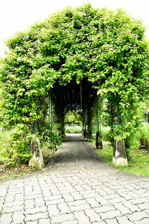 public park: A curved arbour built from foliage plants and iron structure in a public park.