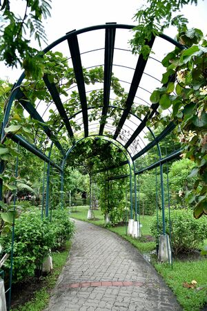 arbour: An arbour made from iron structure decorated with variety of gardening plants.