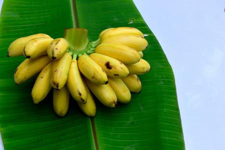 firmeza: Un nivel o tallo de banano con cerca de 17 frutas de color amarillo. Cada fruto consiste de la capa protectora externa y la parte interna comestible.