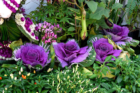 kitchen garden: Kitchen garden decorated with purple cabbages , eggplants of various colors , and other flowers.