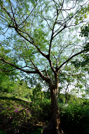 provided: The flowering plant with its green fern - like leaves that provided full shade.