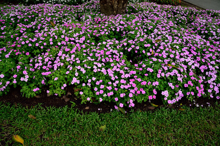 potherbs: Herbaceous plants  that have pinkish flowers and medicinal properties.