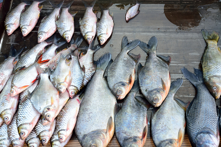 dead fish: Various types of dead fish sale on tray in a market. Stock Photo