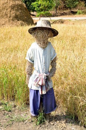 protector: A decoy in human shape in a paddy field as a protector of crops from birds. Stock Photo