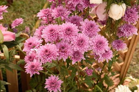 ornamental horticulture: The flowers with alternately arranged leaves and compound inflorescence .