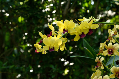 orchid house: Colorful  orchid flowers with yellow tepals and red lips.
