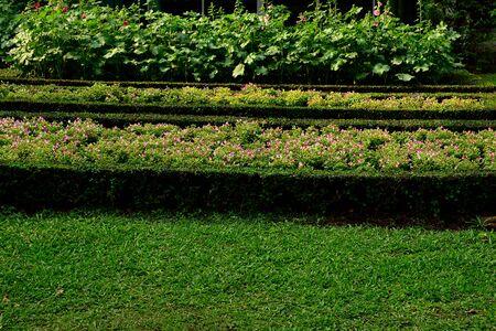 flowering plants: Three rows of flowering plants in Queen Sirikit  public park , Bangkok , Thailand.