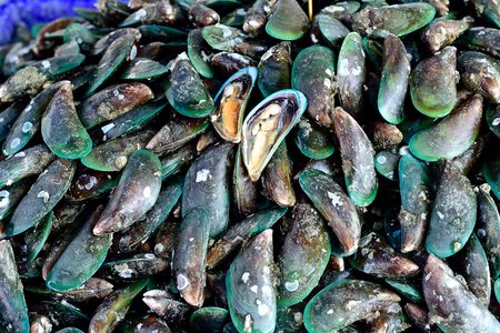 bivalve: The green mussel  , an invasive mollusk , is edible and used widely in Asian cuisines.