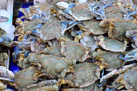blue swimmer crab: The bright blue to green brown crabs with white spots on carapace.