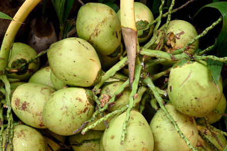 Coconuts are versatile and every part of it can widely be used .